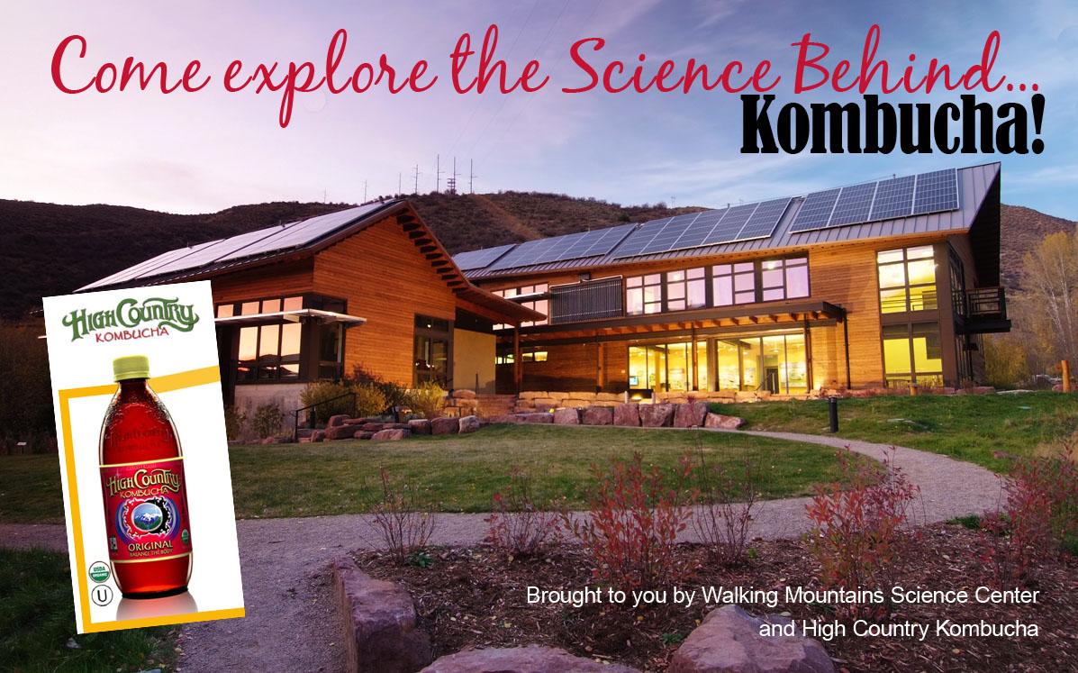 The Science Behind Kombucha