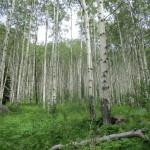 Bowmans Shortcut Hiking Trail Colorado