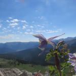 Machine Gun Ridge Hiking Trail Colorado