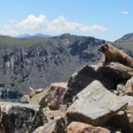 Notch Mountain Hiking Trail Colorado