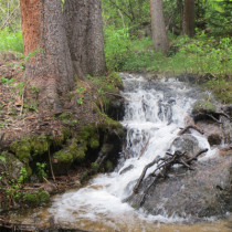 Vail Creekside Nature Tours