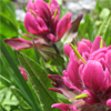 Paintbrush Wildflower_Walking Mountains Science Center_Vail