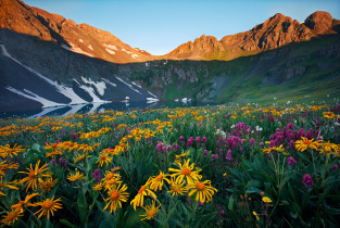 Vail Wildflower Guide