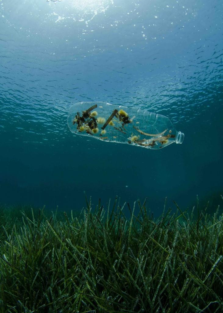 January Sustainable Film Series A Plastic Ocean